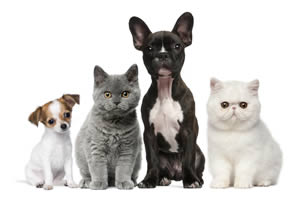 Puppies and kittens image