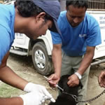 give dog rabies vaccination image