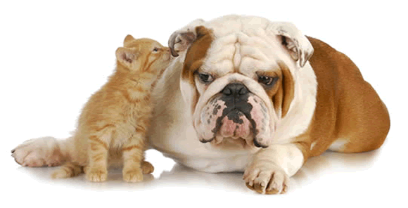 Cat whispering in dog